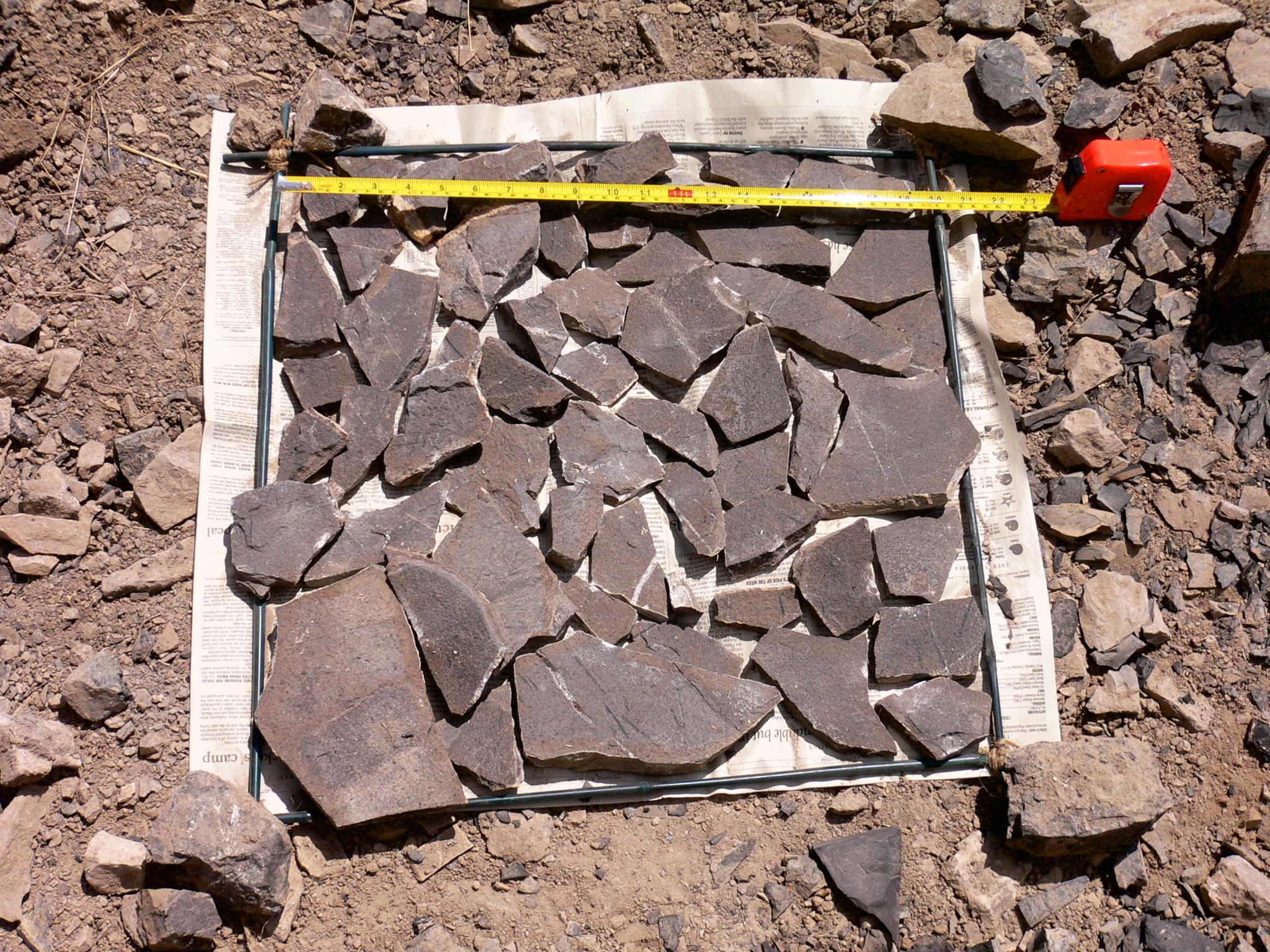 samples holding graptolite fossils