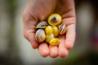 Snail shells were a popular item found in the scavenger hunt. Photo: Douglas Levere