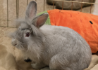 Rabbit at the Erie County SPCA. March 29, 2016.