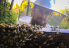 Peterson inspects a hive frame. An inspection includes checking for proper food stores — pollen, nectar and honey — as well as evidence of the queen — eggs, larvae, capped brood and the queen herself — to ensure the colony is healthy and reproducing. Peterson also keeps an eye out for hive invaders, like hive beetles, wax moths and varroa mites. Photo: Douglas Levere