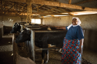 Sister Janepha from the Immaculate Heart Sisters of Africa at Baraki Sisters Farm. The Sisters pasteurize milk from the farm's cows and transport it within the Mara Region.