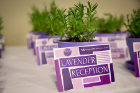 Lavender Reception cards with a lavender UB lapel pins attached, rest against potted lavender plants.