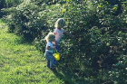 Flora (left) and Charlotte pick raspberries on the family's farm.