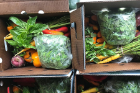 Little Bear Farm CSA (community-supported agriculture) share boxes packed with herbs and vegetables.