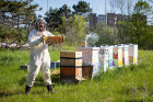 David Hoekstra, clinical assistant professor of biological sciences, checks on the bee hives near Crofts Hall.