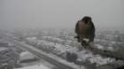 falcon winter2