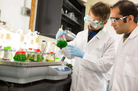 Students in the lab of environmental and water resources  engineering assistant professor Berat Haznedaroglu examine a flask containing algae.