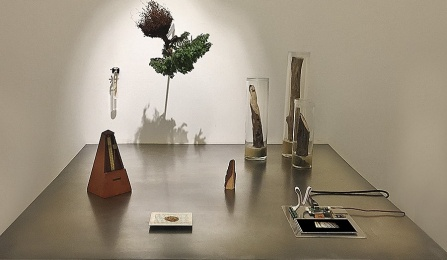 Atop a steel table sit Oregon pine tree branches, a metronome and LCD screen. A Bonsai tree and test tube containing bacteria of the tree are staked to the wall.