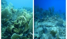 A reef shown before and after a hurricane.
