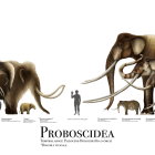 Image showing numerous Proboscideans, including many that look like mammoths or elephants of varying sizes. Credit: Liam Elward, may not be republished.