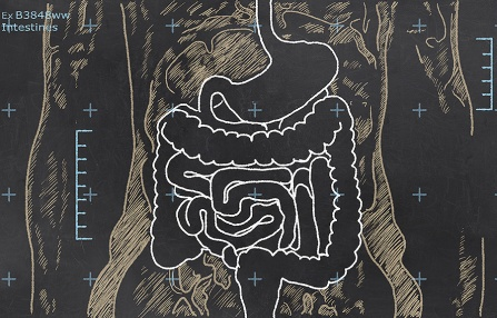 Chalk drawing of the digestive system.