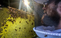 Nick Peterson inspects his hive.