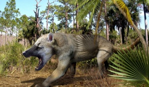 This image depicts a beardog, an early carnivore — neither bear nor dog — that roamed the Northern Hemisphere between about 40 and 5 million years ago.