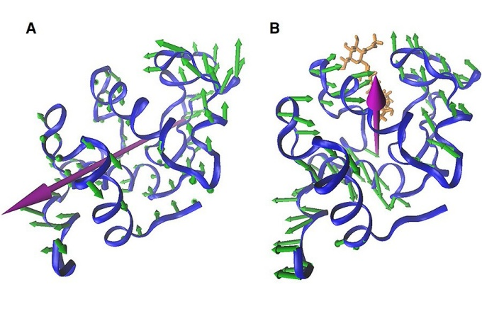 An illustration of the different ways in which proteins vibrate. The left figure shows proteins in a clamping motion, while the right figure shows proteins in a twisting motion.