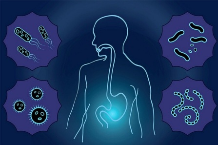 Illustration of gut microbiome