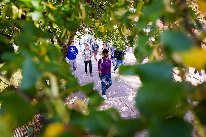 Students walking on campus, framed through the leaves of a tree