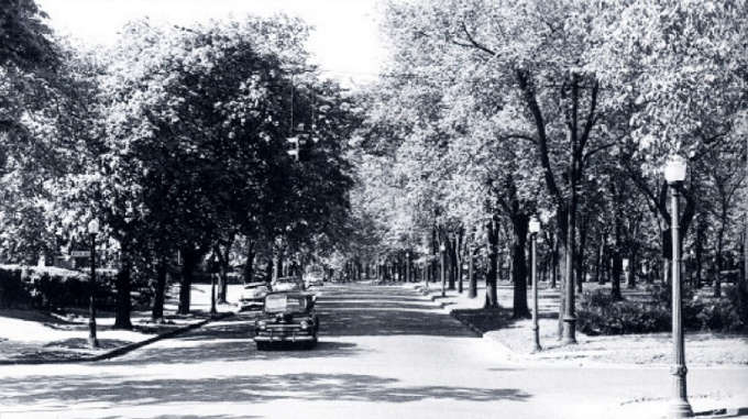 A 1953 photograph of Humboldt Parkway. Buffalo & Erie County Historical Society