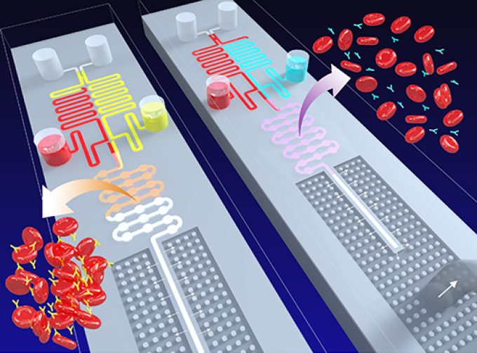 An illustration depicting agglutinated blood and un-agglutinated blood moving through a chip.