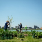 Volunteers plant more than 200 trees and shrubs and about 260 perennials to stave off erosion, as well as 600 aquatic plants along the shoreline of Lake LaSalle.