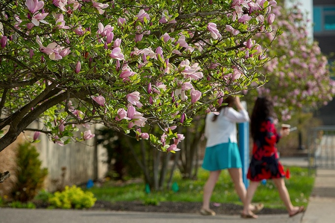 Students walking on the South campus in the springtime.