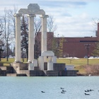 Several birds, including loons, swim on Lake LaSalle near Baird Point on the North Campus.