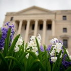 Purple and white Hyacinth flowers bloom in front of Abbott Hall on UB's South Campus.