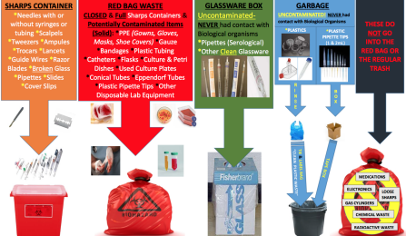 Poster of showing how to dispose of various types of laboratory materials as regulated medical waste.