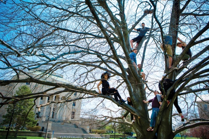 Students in tree.