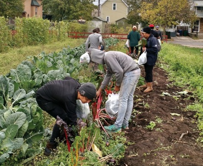 Participants in the Massachusetts Avenue Project's (MAP's) Growing Green Youth Program harvest rainbow chard.