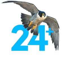 "Hawk graphic denoting the number ""+24"""
