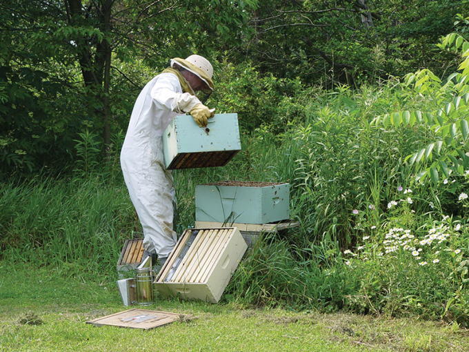 Thomas Kegler in the process of beekeeping