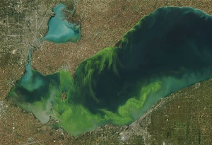 Satellite image shows an algae bloom in Lake Erie, 2011.