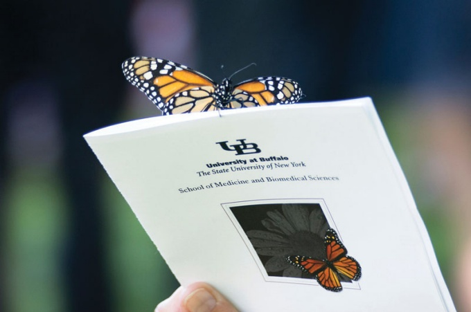 Butterfly on pamphlet