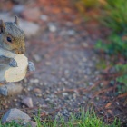 A Squirrel nibbling some food on UB's North Campus.