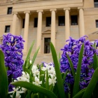Spring flowers in bloom in front of Abbott Library.