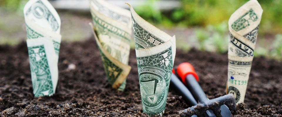 Money sprouting from ground.