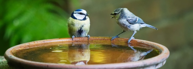 two birds sitting on a bird bath.