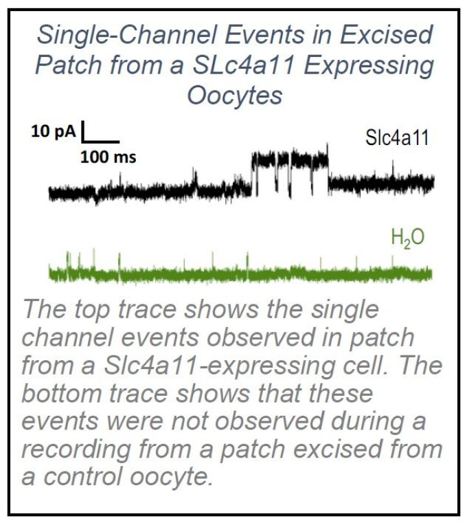 image of single-channel events in an excised patch.
