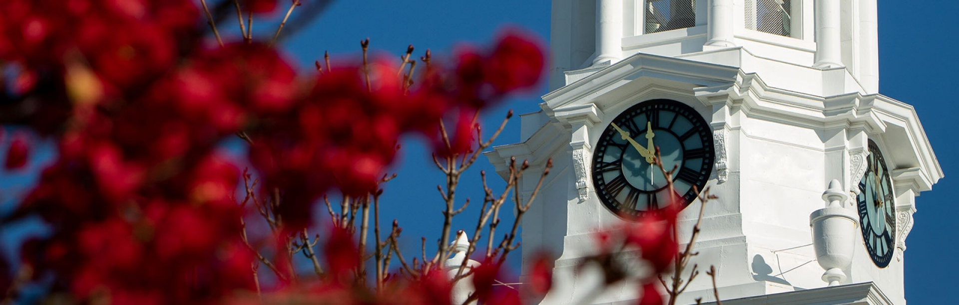 Photo of Hayes Hall clock tower with red flowers in the foreground.