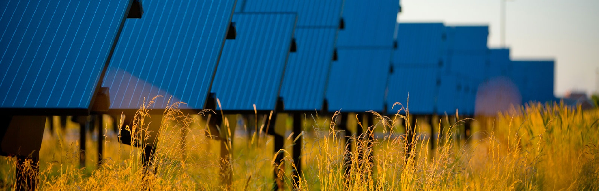 Photo of the Solar Strand panels with golden grasses highlighted in the foreground.