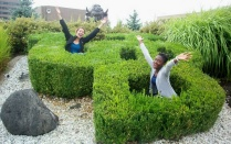 Two students with their arms raised while sitting in the UB shaped shrubbery.