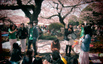 People observing sakura in Japan
