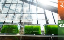 Algae tanks.