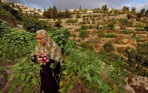 "Spring 2019 Workshop: Environmental Justice in the Occupied Palestinian West Bank Photo: 'Land of Olives and Vines, Occupied Territories of Palestine' photograph courtesy of National Geographic, UNESCO World Heritage Site In the Central Highlands between Nablus and Hebron, a series of ancient terraces, agricultural towers, and a complex irrigation system have been used to cultivate Battir since antiquity. The agricultural practices—still in use today—are some of the oldest farming methods known to humankind. In 2014, the site was listed ""in danger"" because of ongoing geo-political transformations in the region. According to UNESCO, Israel's controversial West Bank Barrier ""may isolate farmers from fields they have cultivated for centuries."""
