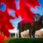 Red leaves in front of bronze buffalo.