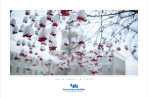 Poster option 14: South Campus in Winter