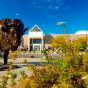 Bronze buffalo statue in front of the Center for the Arts.