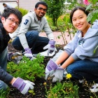 students volunteering to beautify a local garden