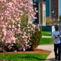 students walking across campus in the spring.
